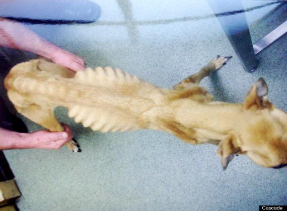 Dogilike.com :: การดูแลสุนัขที่ขาดอาหาร
