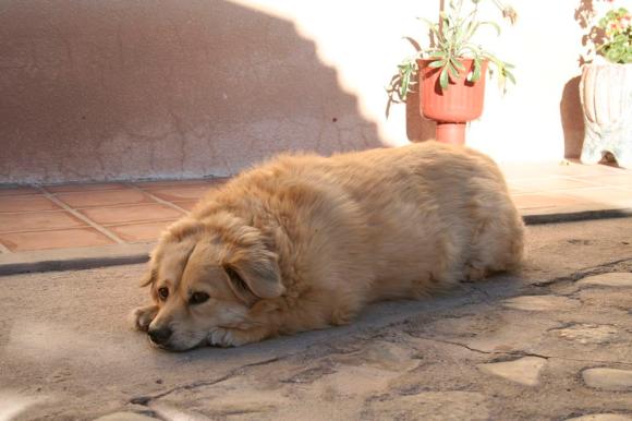 Dogilike.com :: เช็กด่วน!! 10 จุดบนร่างกายบ่งบอกว่าน้องหมาแก่แล้ว