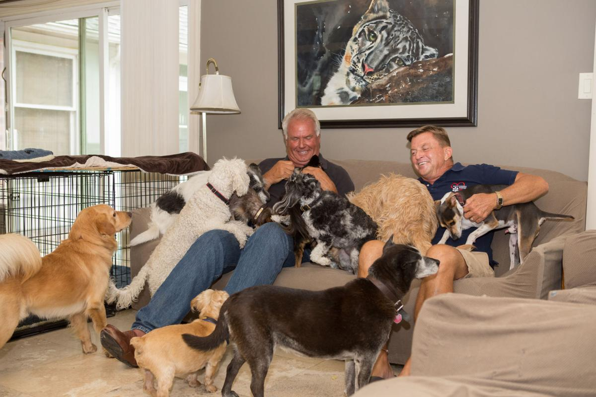 Dogilike.com :: LIFE IN THE DOGHOUSE (บ้านนี้มีแต่หมา)  ส่งต่อแรงบันดาลใจให้คนรักน้องหมา ได้เข้าใจ ได้รอยยิ้ม ได้น้ำตา