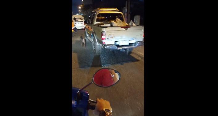 Dogilike.com :: โซเชียลแชร์คลิปสลดใจ กระบะนำหมามาทิ้ง ปล่อยให้วิ่งตามรถจนอ่อนแรง