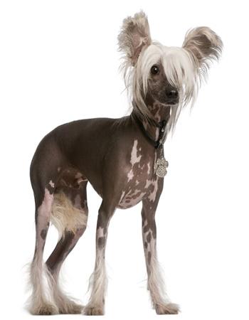 Dogilike.com :: 3 สายพันธุ์น้องหมาไร้ขน! ที่ใครหลายคนต่างตกหลุมรัก