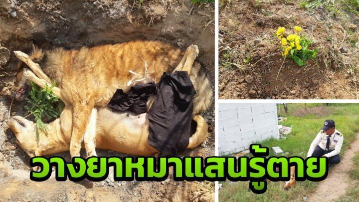 Dogilike.com :: 2 หมาแสนรู้ชอบยืนเคารพธงชาติ โดนวางยาเบื่อตายคู่