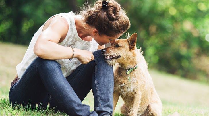 Dogilike.com :: จัดอันดับ 5 เทคนิคผูกมิตรกับน้องหมาแปลกหน้า (แบบไม่ให้น้องหมากลัวเรา)