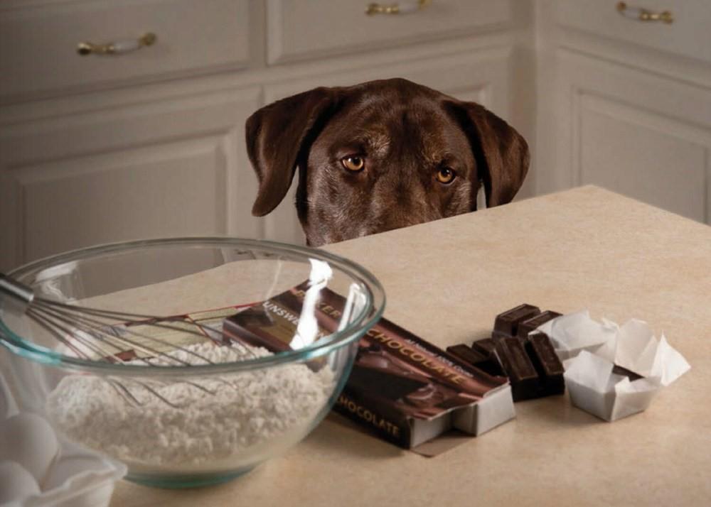 Dogilike.com :: จัดอันดับ 5 สิ่งที่คนคิดว่าให้น้องหมากินได้ แต่จริง ๆ แล้วอันตราย