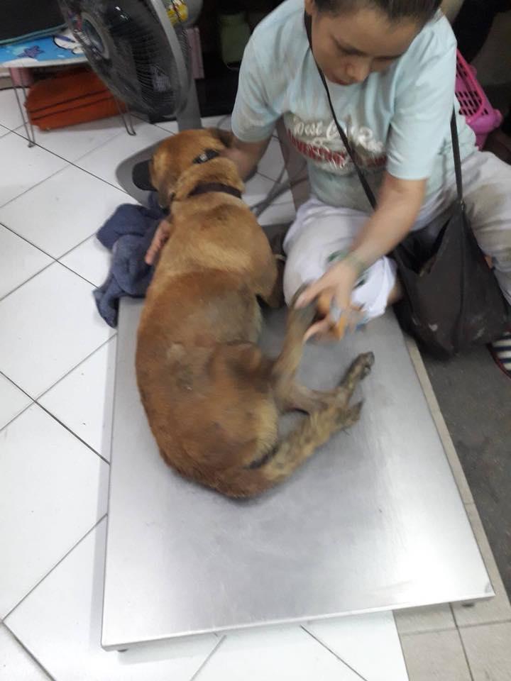 Dogilike.com :: อีกแล้ว! ทหารใช้ปืนอัดลมยิงหมาจรจัด เหตุโมโหเพราะโดนไล่กัด