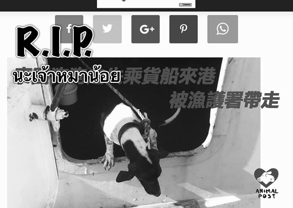 Dogilike.com :: หมาไทยติดเรือส่งสินค้าไปฮ่องกง ถูกเจ้าหน้าที่ทำการุณยฆาตแล้ว