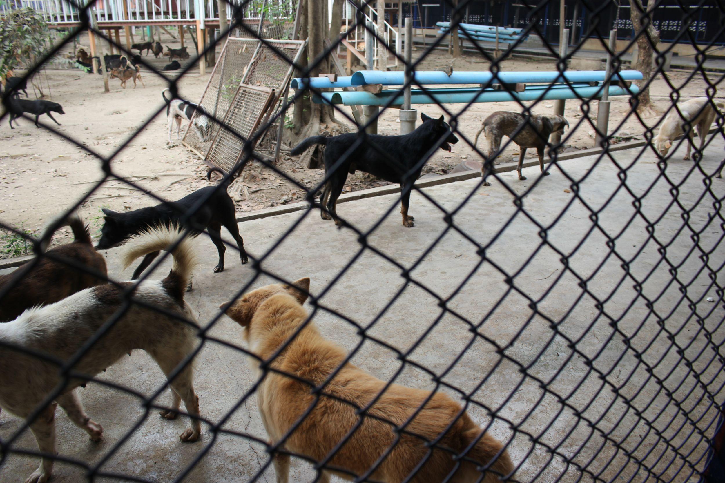 Dogilike.com :: โรงพยาบาลสัตว์ทองหล่อจัดกิจกรรม ฉีดวัคซีนให้น้องหมา