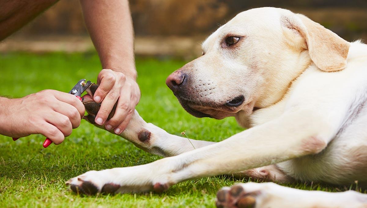 Dogilike.com :: จัดอันดับ 5 สิ่งที่เจ้าของชอบทำ แต่น้องหมายี้สุด ๆ