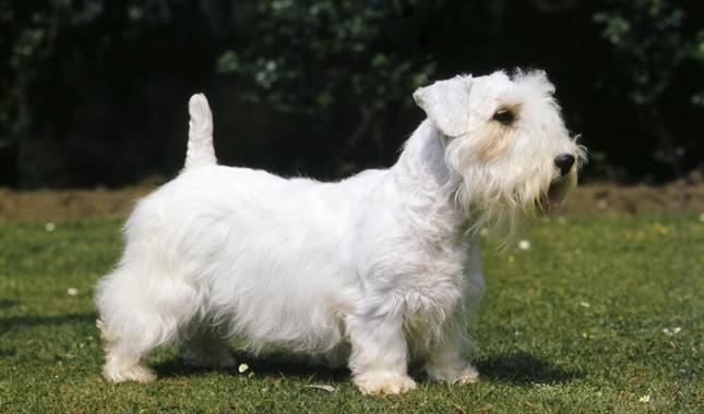 Dogilike.com :: จัดอันดับ  5 สายพันธุ์น้องหมาขาสั้น เห็นแล้วใจละลาย