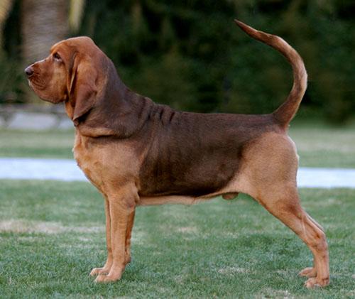 Dogilike.com :: จัดอันดับ 5 สายพันธุ์น้องหมาจากการ์ตูนชื่อดัง