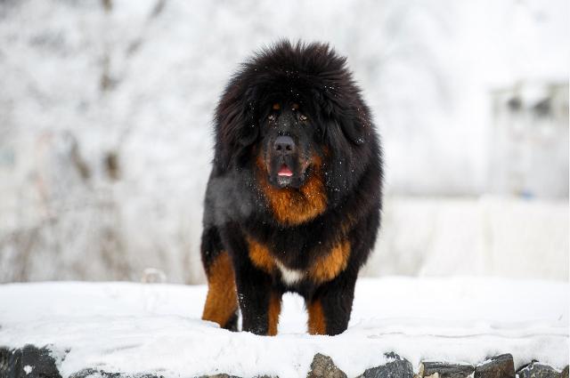Dogilike.com :: จัดอันดับ 5 สายพันธุ์น้องหมาโปรไฟล์สุดไฮโซ