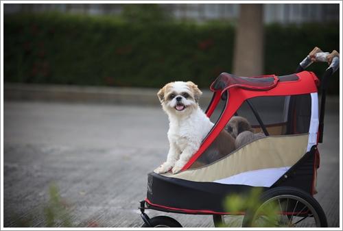 Dogilike.com :: จัดอันดับ 5 สิ่งที่คนเลี้ยงหมาทำแล้วถูกมองว่า ดูเว่อร์เกินไป !