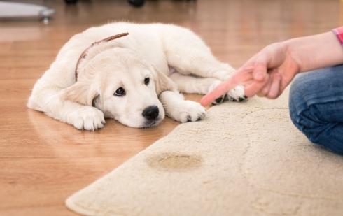 Dogilike.com :: จัดอันดับ 5 สิ่งที่น้องหมาทำแล้วเจ้าของจะไม่ทน!!!