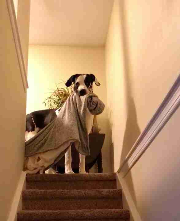 Dogilike.com :: จัดอันดับ 5 สิ่งที่น้องหมาชอบทวงจากเจ้าของ