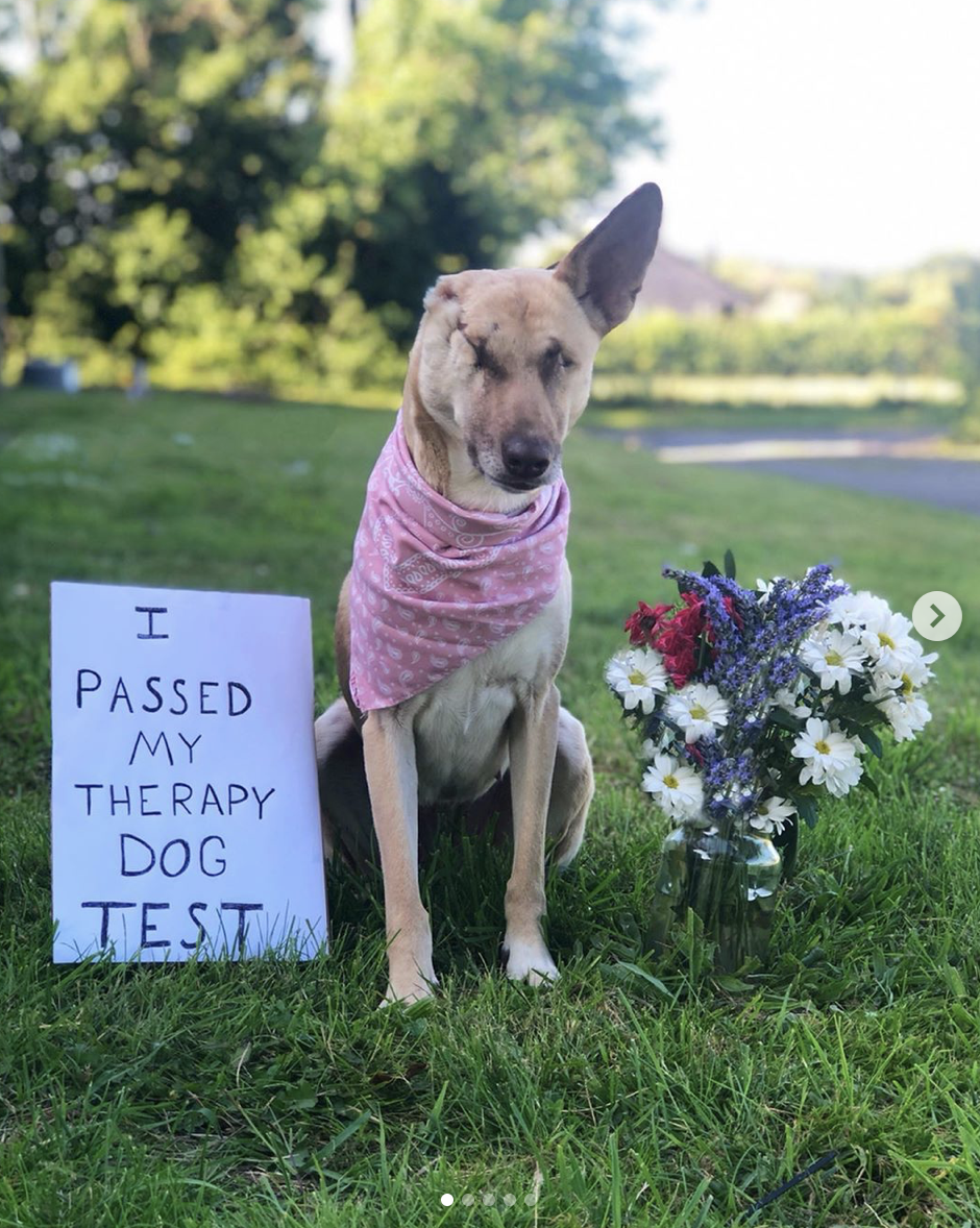 Dogilike.com :: พิการตัวแต่ไม่พิการใจ จากน้องหมาพิการแสนเศร้าสู่การเป็นน้องหมาบำบัดแสนสุข