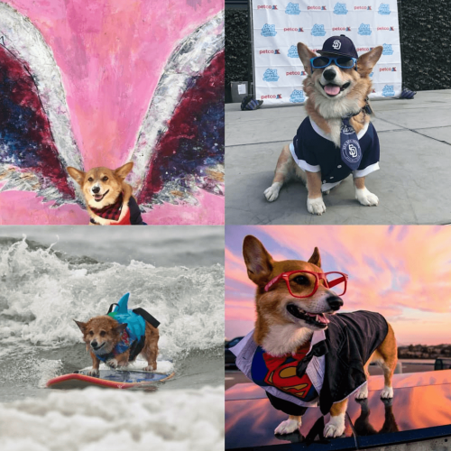 Dogilike.com :: จัดอับดับ 5 น้องหมาโคตรปังในไอจี ที่ทาสหมาควรกดฟอล