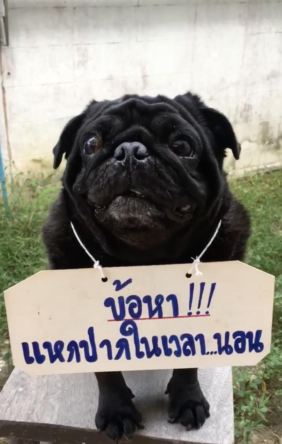 Dogilike.com :: ทำโทษน้องหมาสุดน่ารัก ข้อหาแหกปากเวลานอน