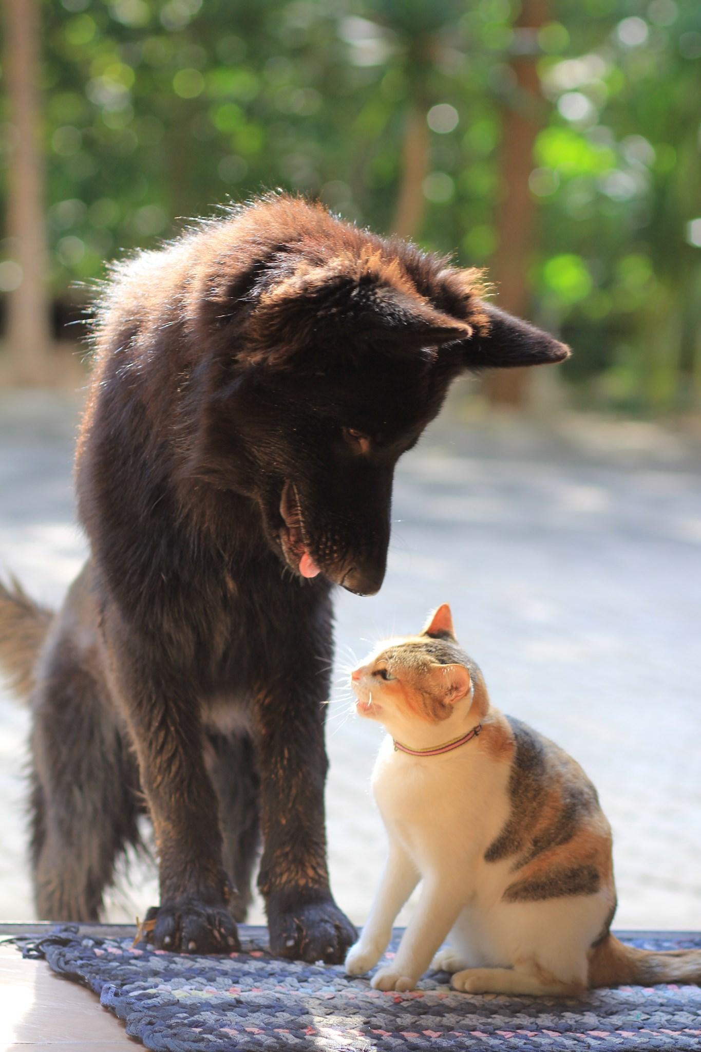 Dogilike.com :: เชื่อว่าเจ้าโทนคงอยากกลับวัด พระอาจารย์วัดป่าโพสต์ตามหาน้องหมาที่หายไป
