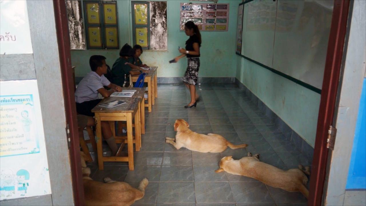 Dogilike.com :: ตูบสามสหายสายรักเรียน ไปโรงเรียนไม่เคยขาด