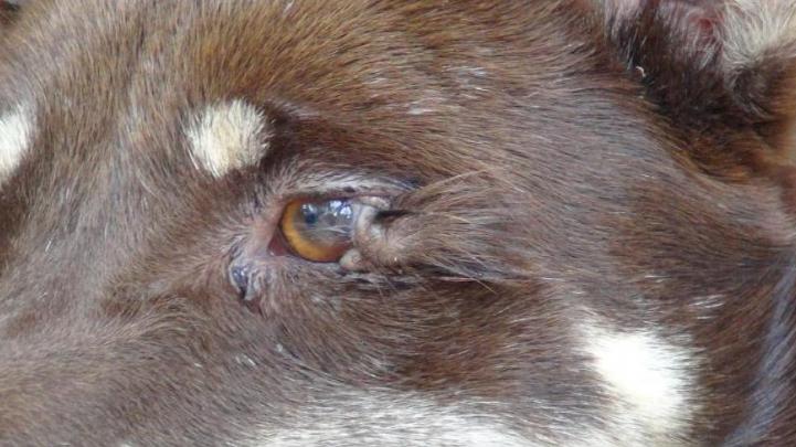 Dogilike.com :: แปลกตา! เจ้าขนตางอน สุนัขที่มีขนตายาวกว่า 2 ซม.