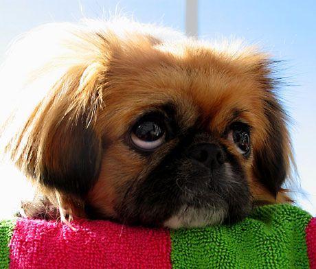 Dogilike.com :: สงสัยไหม ... เข้าใกล้ทีไร ทำไมน้องหมาถอนหายใจใส่ทุกที?