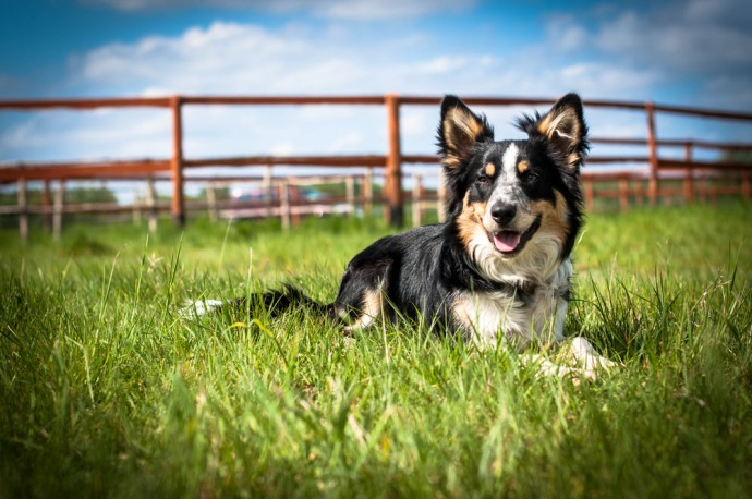 Dogilike.com :: จัดอันดับ 5 สายพันธุ์น้องหมาเก่ง ถูกฝึกเพื่อใช้งานมากที่สุด!