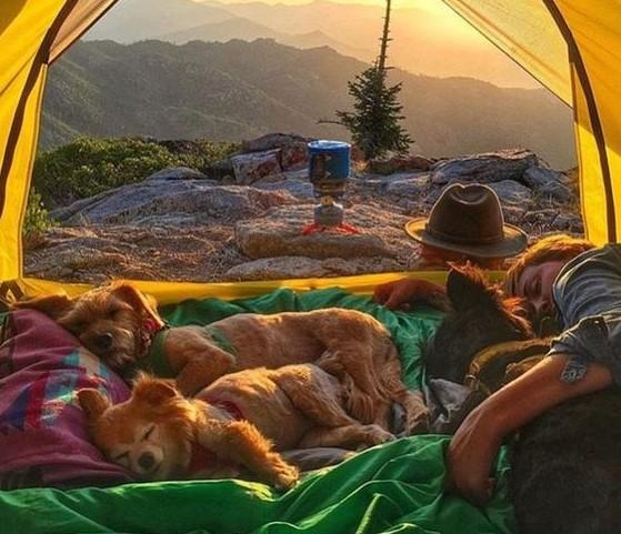 Dogilike.com :: How to เที่ยว ... คู่มือเที่ยวปีใหม่กับน้องหมาแบบแฮปปี้