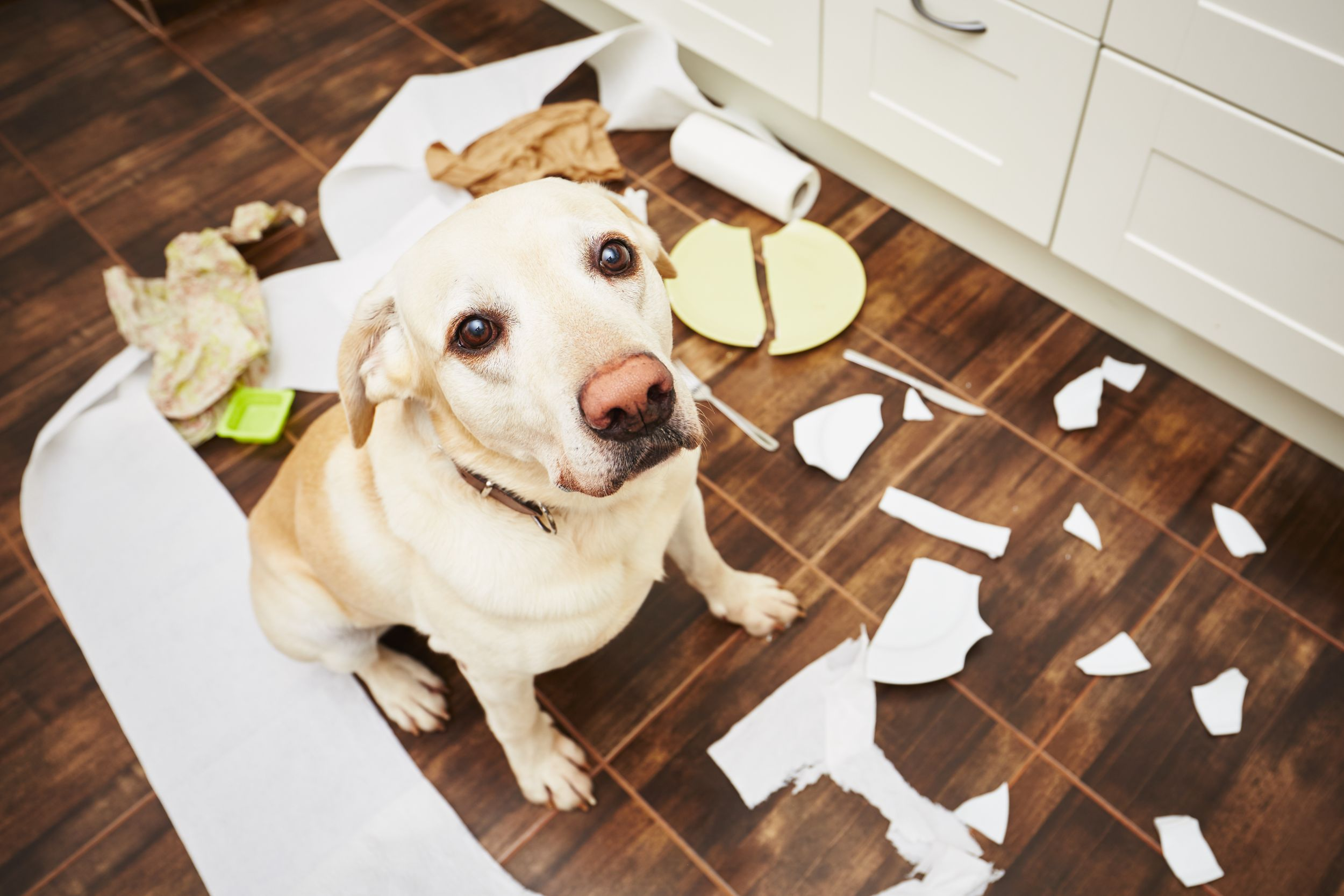 Dogilike.com :: หมากลัวกรง เกิดจากอะไร จะแก้ยังไงดี