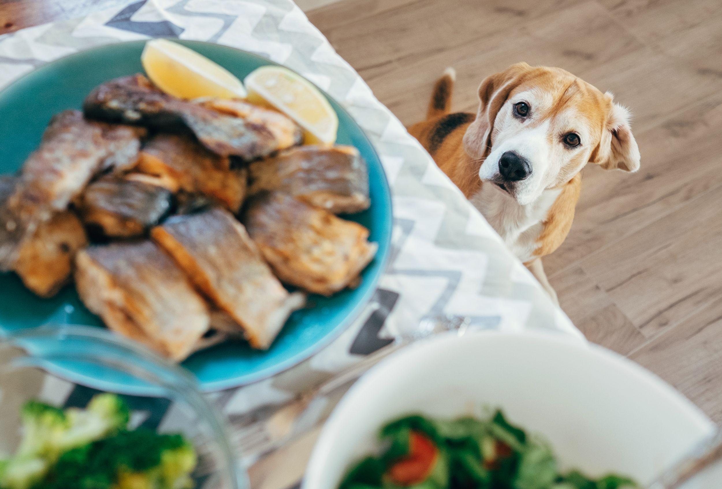 Dogilike.com :: เจ้าของกินคำ หมากินคำ พฤติกรรมนี้ทำให้เกิดผลเสียกับน้องหมายังไงบ้าง