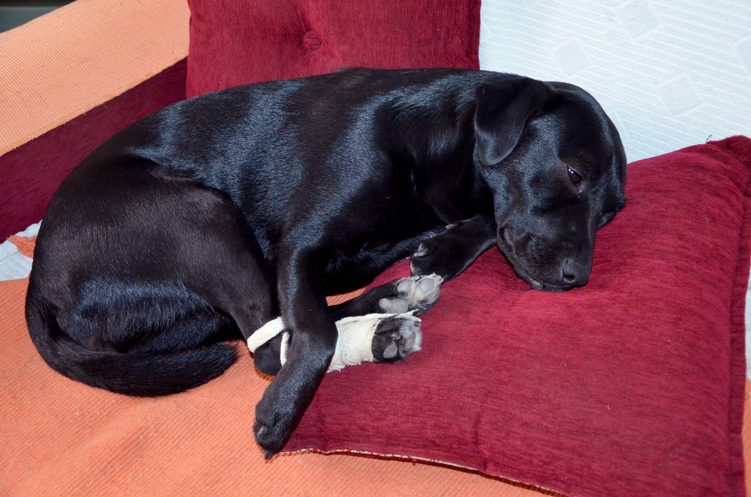 Dogilike.com :: จัดการกับ นิสัยหวงเท้า ของน้องหมา ... ต้องทำไงถึงเอาอยู่!