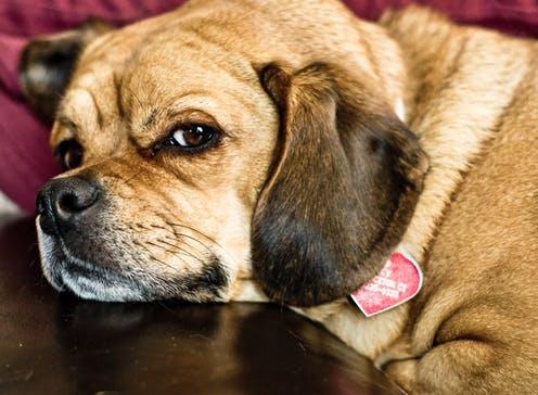 Dogilike.com :: เปิดใจ ... เจ้าของแบบไหนที่น้องหมา เกลียด