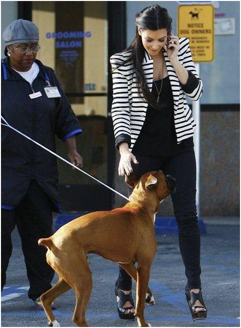 Dogilike.com :: ทำไงดีพี่จ๋า หมาหนูชอบดมเป้าคนอื่น!!