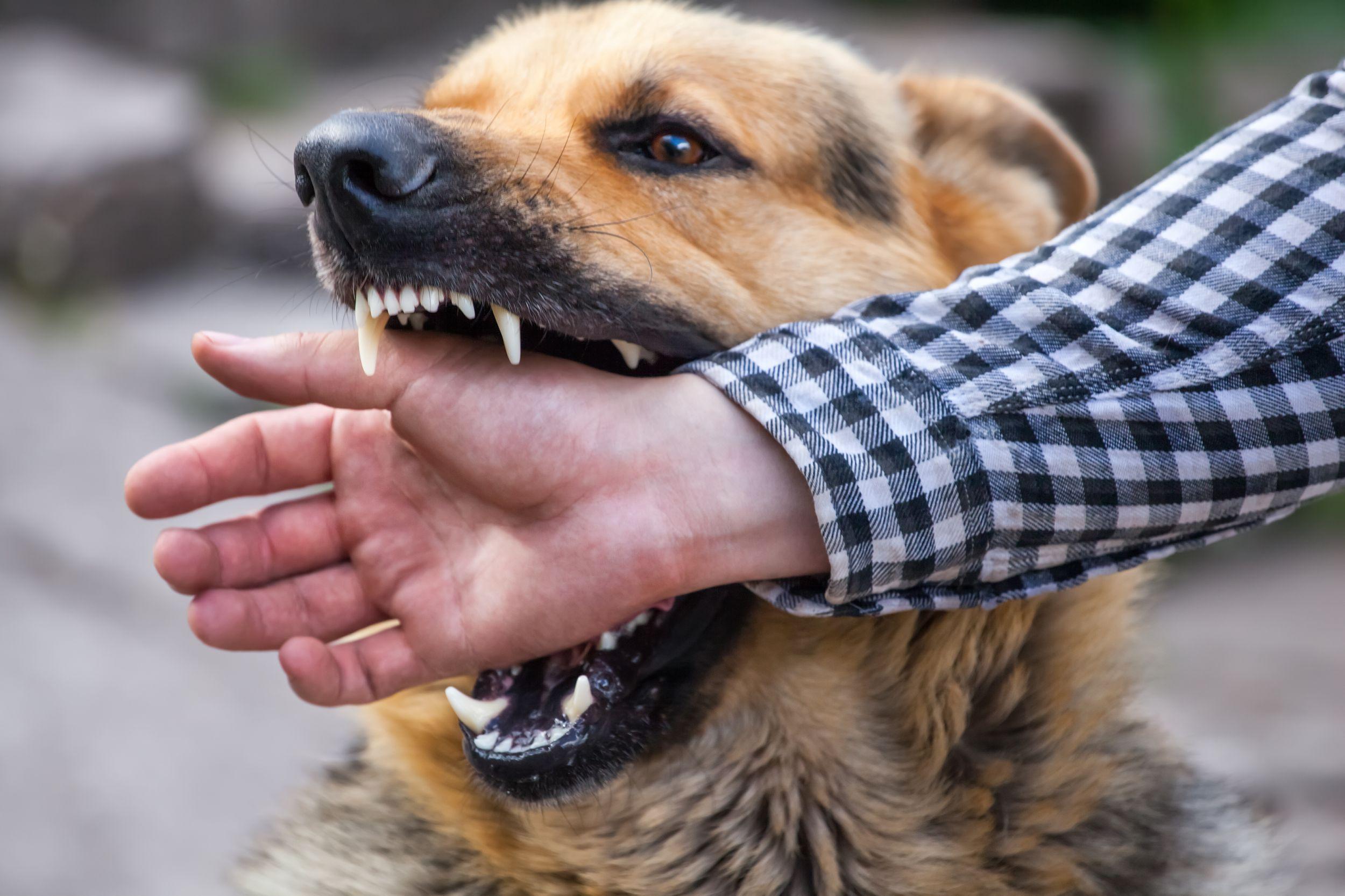 Dogilike.com :: หมากัดเจ้าของ เลี้ยงไม่ได้จริงหรือ?