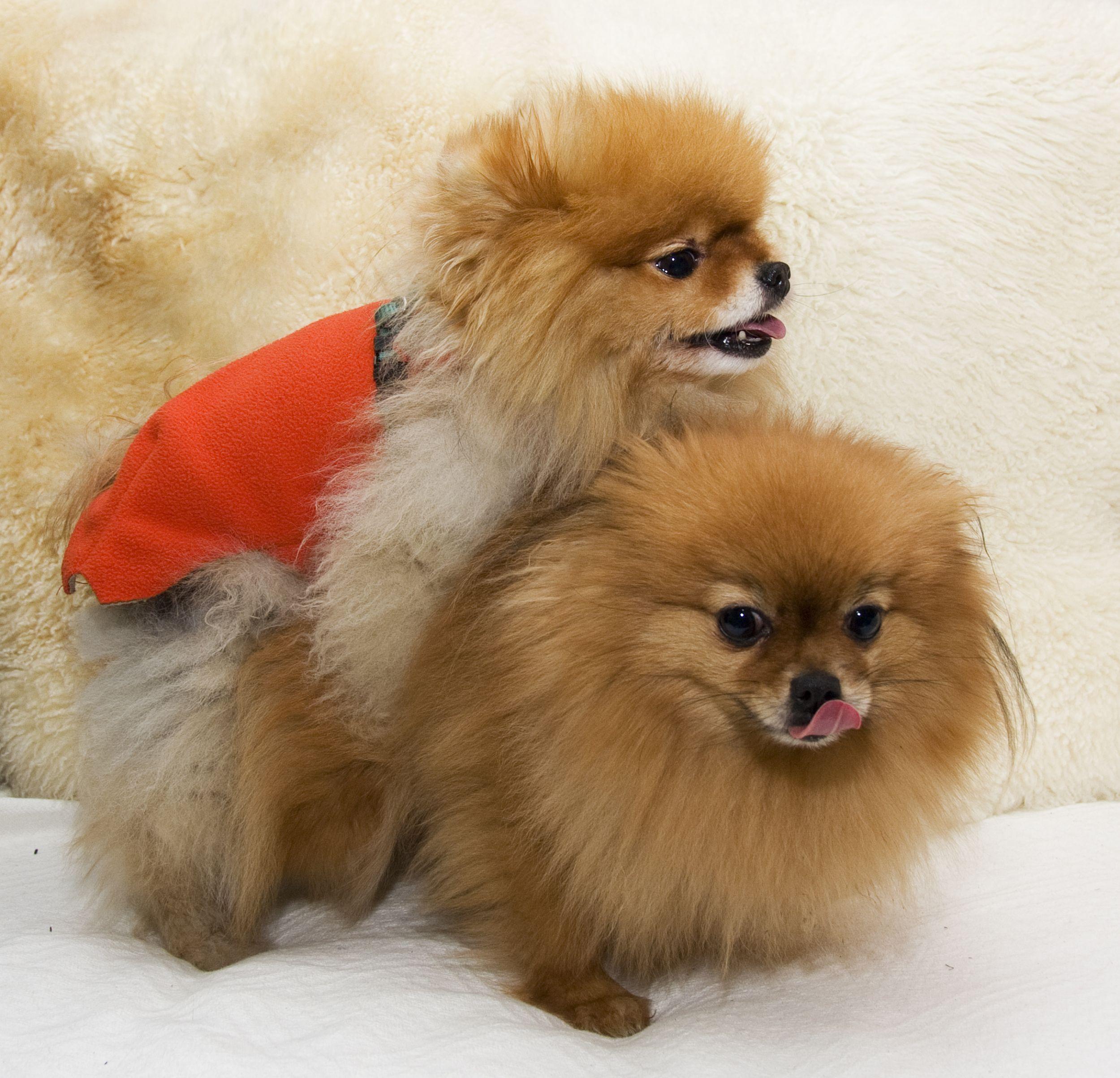 Dogilike.com :: พี่คะทำไงดีหมาหนูเป็นทอม ... ตามไปหาคำตอบว่า หมาเป็นทอมได้จริงเหรอ?
