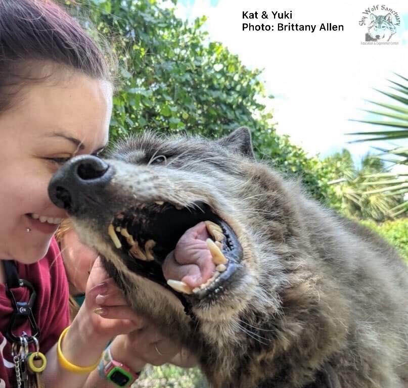 Dogilike.com :: แค่เลี้ยงหมาตามกระแส ... Wolfdog น้องหมาค่าตัวเป็นแสนยังถูกทิ้ง