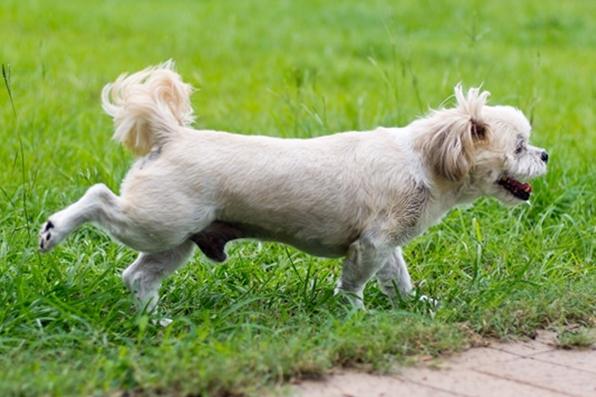 Dogilike.com :: สงสัยป่ะ ทำไมน้องหมาอึแล้วต้องทำท่าเอาขาหลังเขี่ยพื้น?