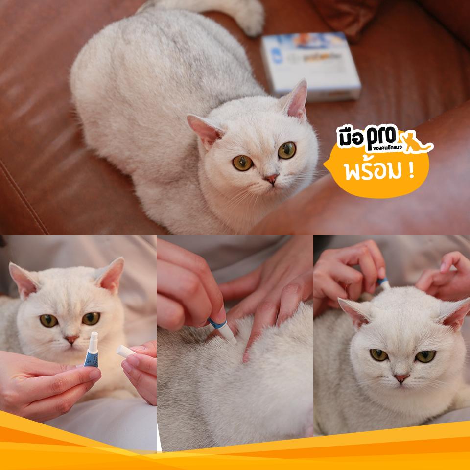 Dogilike.com :: แมวกินยายาก ก็สยบพยาธิได้ ด้วย มือโปรของคนรักแมว