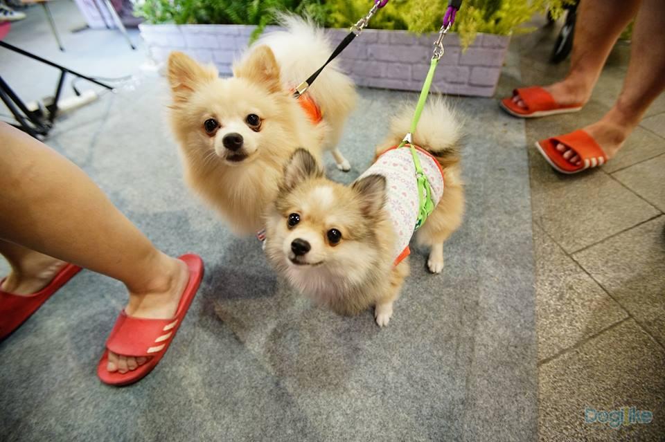 Dogilike.com :: หวานสุด ๆ กับการจดทะเบียนคู่รักหมาครั้งแรกในไทย ที่เซ็นทรัลอีสต์ วิลล์