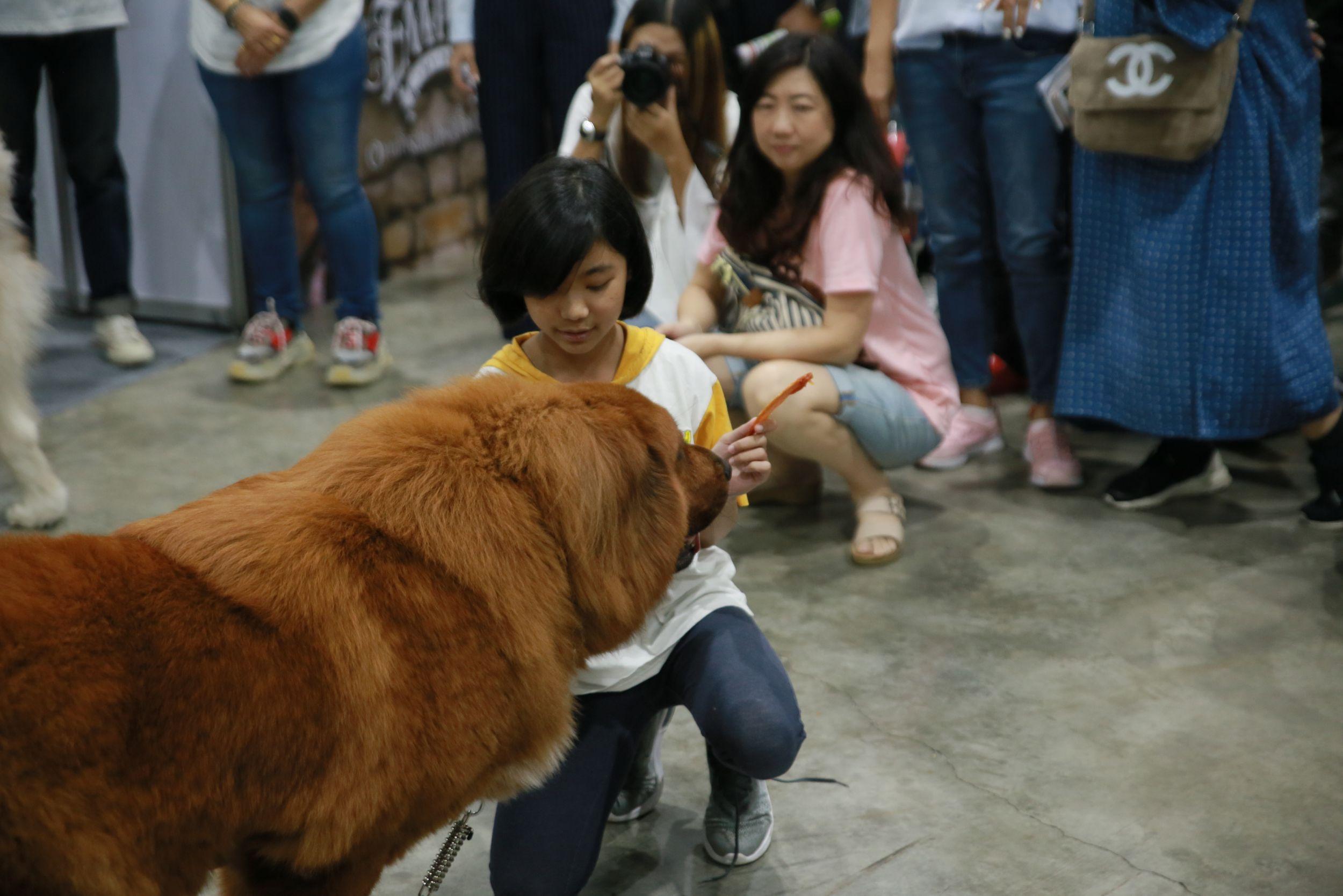Dogilike.com :: Lintbells เปิดเวทีชวนคนรักหมามาคุยในหัวข้อ มีลูกก็เลี้ยงหมาได้นะ