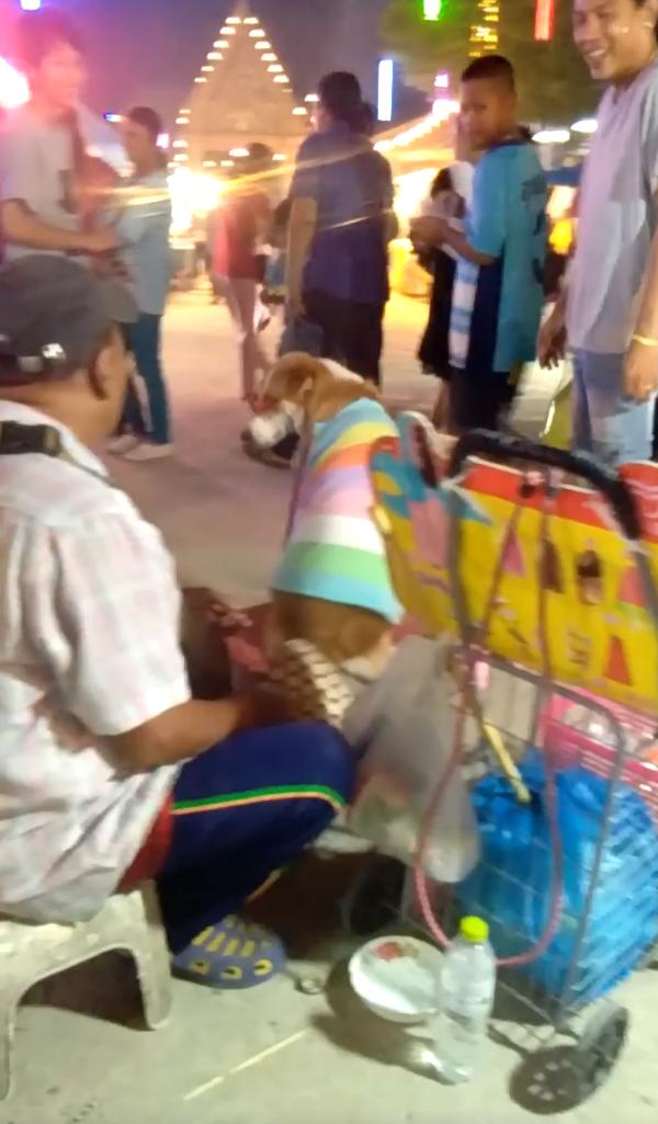 Dogilike.com :: คนรักหมาสุดทน ... เผยคลิปชายบังคับหมาขอทาน ทุบตี - บังคับกินกาแฟให้ตื่น!!