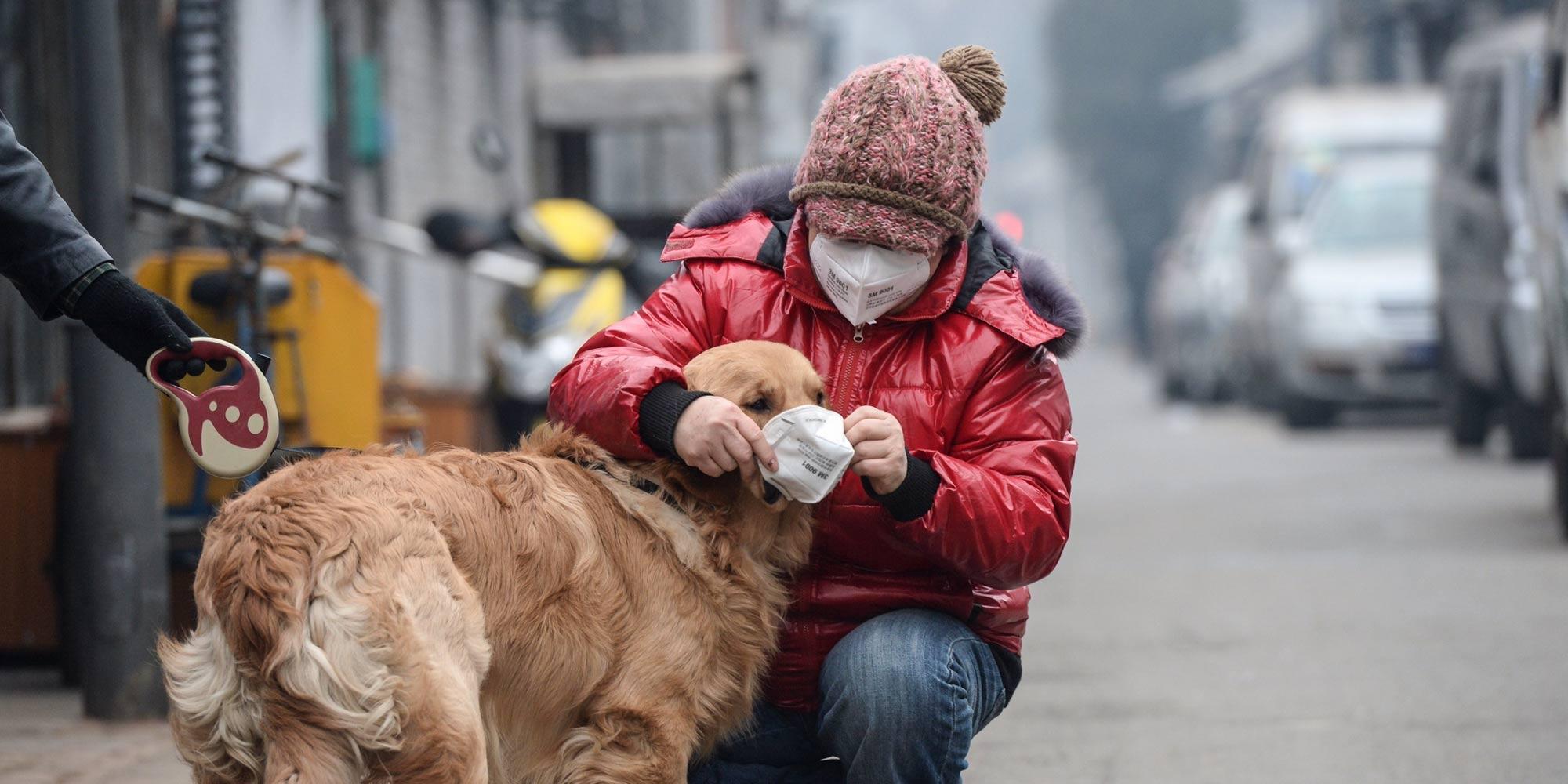 Dogilike.com :: ต้องรอด! ... 6 วิธีพาน้องหมาเอาตัวรอดจากอันตรายฝุ่นควันพิษ