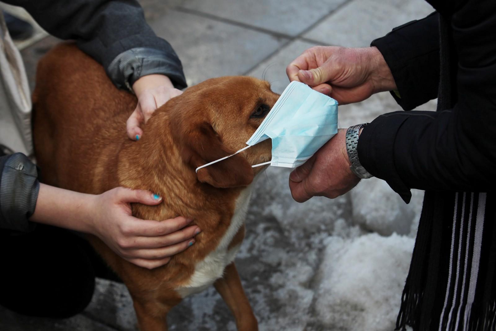 Dogilike.com :: สาวโพสต์ประสบการณ์ น้องหมาปอดอักเสบ คาดอาจเกิดจากฝุ่น PM 2.5