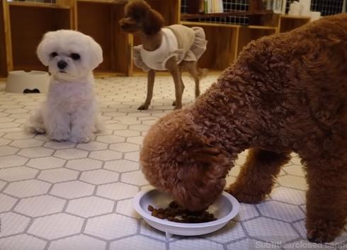 Dogilike.com :: เกาะรั้วแอบดูน้อง ... จะน่ารักแค่ไหนเมื่อเหล่าลูกหมาต้องเข้าโรงเรียนอนุบาล