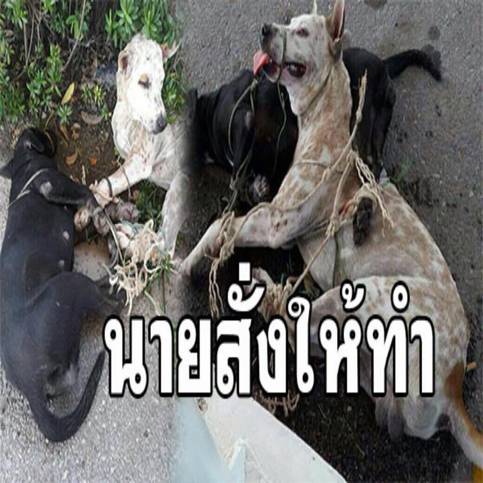 Dogilike.com :: Update ข่าวทหารยศใหญ่สั่งทำร้ายน้องหมา ตอนนี้น้องหมาได้รับความช่วยเหลือแล้ว!