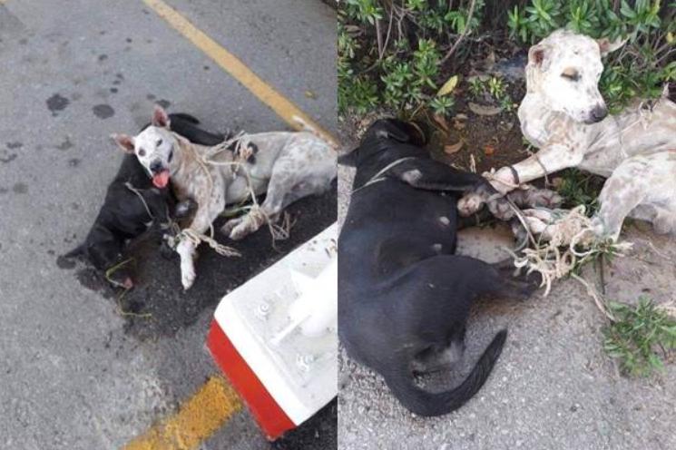 Dogilike.com :: Update ข่าวทหารสั่งทำร้ายหมา ปศุสัตว์แจง แค่เข้าใจผิด! มัดเพราะกลัวหนี ไม่ได้ทรมาน