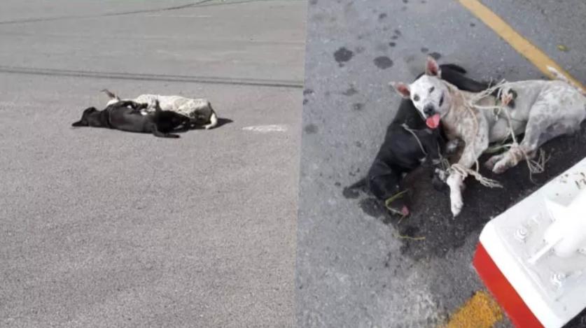 Dogilike.com :: พบแล้ว! น้องหมาดำอีกตัวที่ถูกทหารยศใหญ่สั่งทำร้าย