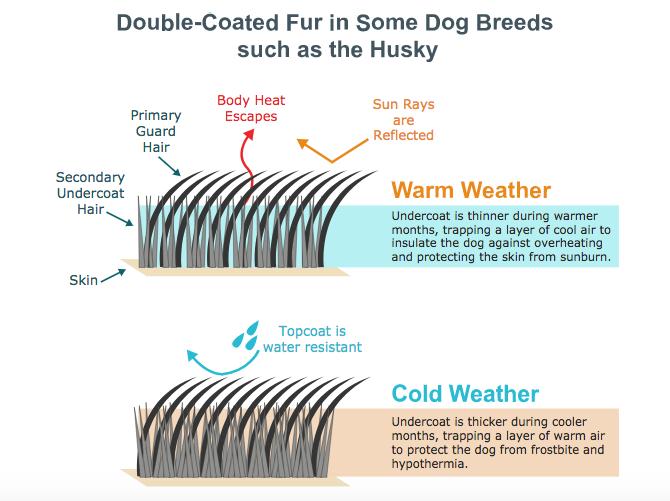 Dogilike.com :: ระวัง ...ไถขนน้องหมาหน้าร้อน! อันตรายมากกว่าสบายตัว
