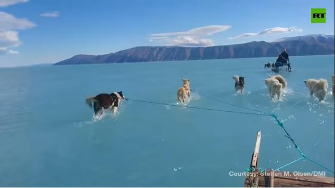 Dogilike.com :: กรีนแลนด์น้ำแข็งละลายหนัก อนาคตอาจไม่มีหมาลากเลื่อนให้เห็นอีกต่อไป