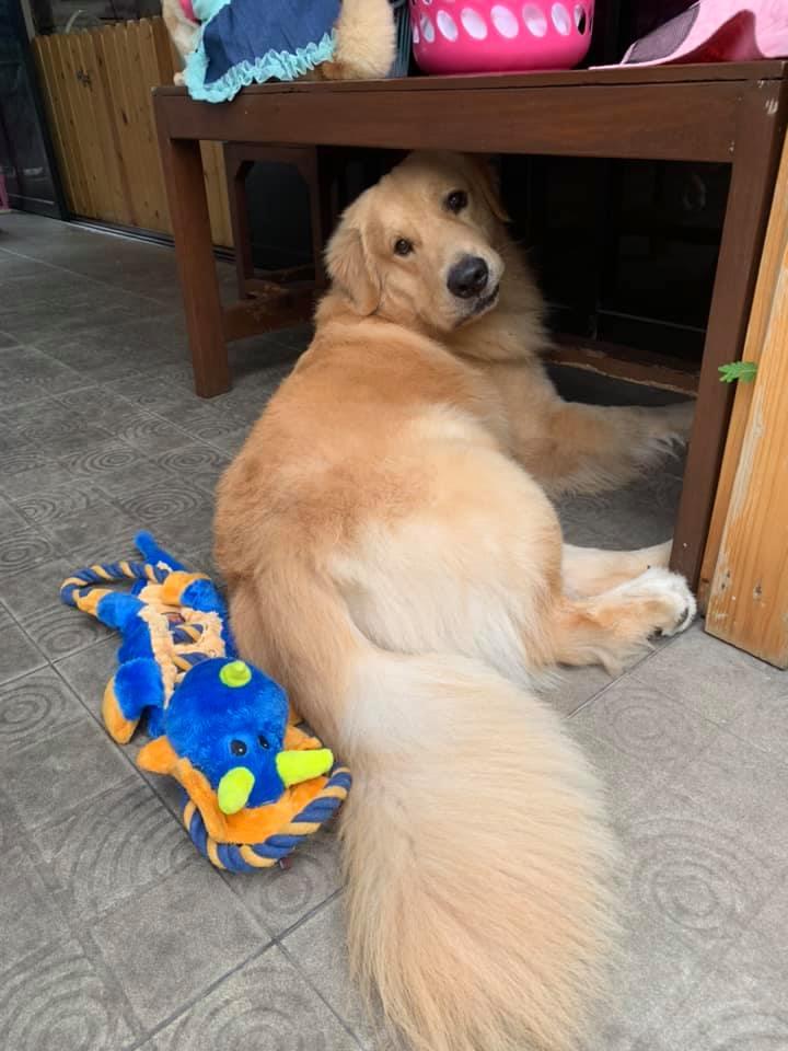 Dogilike.com :: รวมโมเม้นท์สุดอ้อนของน้องหมา ... เจอแบบนี้เป็นใครก็ละลาย