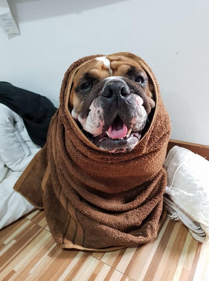 Dogilike.com :: หนูฮานะ พีไหวเหรอ ... มาดูความฮาของเหล่าน้องหมากัน
